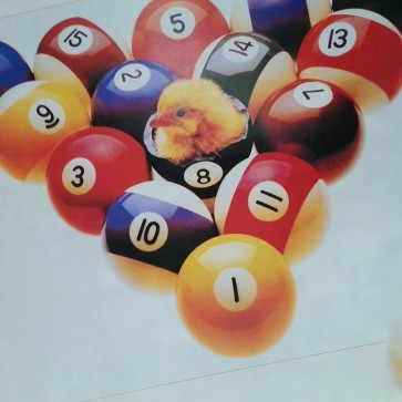 Baby Chick in 8 Ball POSTER