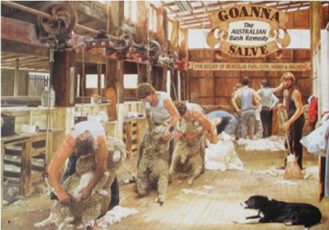 Australian Heritage Series Goanna Salve Sheep Shearing Tin Sign