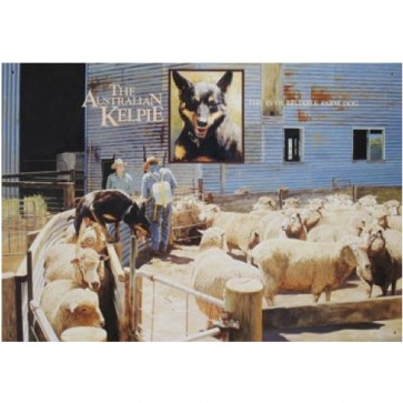 Australian Heritage Series Black & Tan Kelpie Dog Farm Sheep Tin Sign