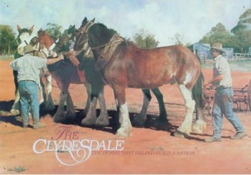 Australian Heritage Series Clydesdale Horses Harnessing Tin Sign